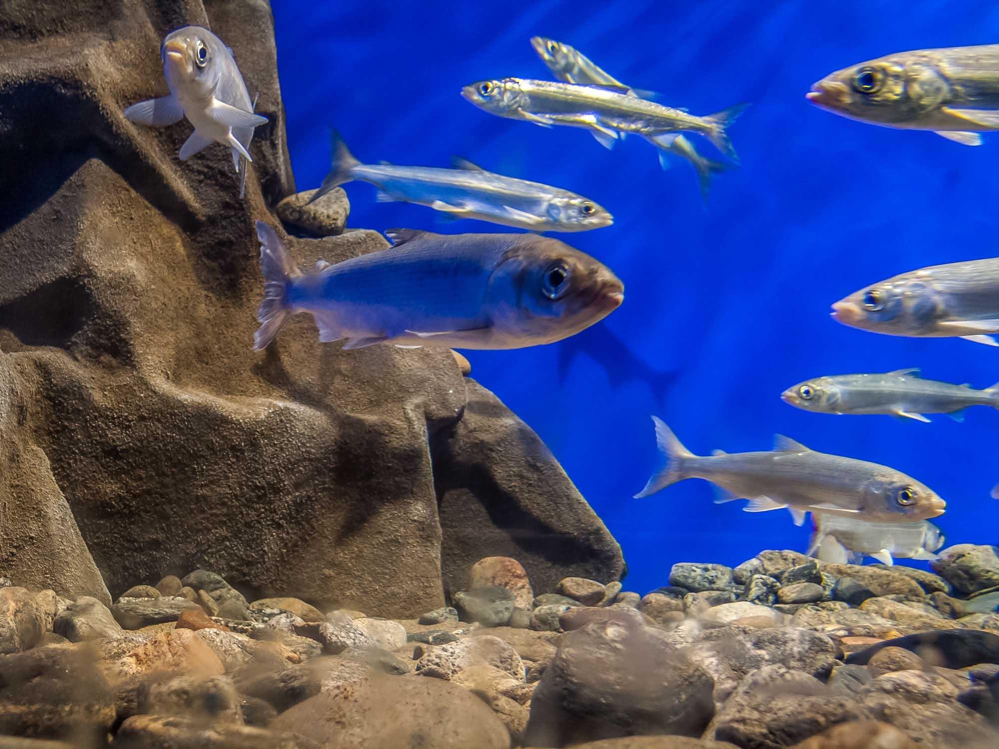 секторе рыбы байкала фото состоянии